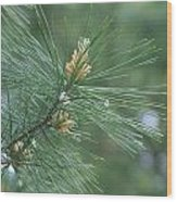 White Pine Flower N Spittle Bug Wood Print