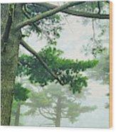 White Pine Trees, Wisconsin, Usa Wood Print