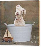 White Pitbull Puppy Portrait Wood Print by James BO  Insogna