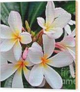 White Plumeria - 1 Wood Print