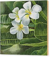 White Plumeria Flowers Wood Print