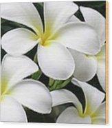 White Plumeria Wood Print