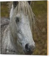 White Pony Wood Print