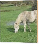 White Pony On The Moors Wood Print