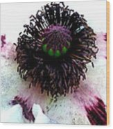 White Poppy Macro Wood Print