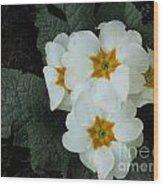 White Primroses Wood Print