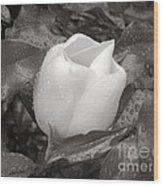 White Rain Wood Print