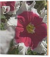 White-red Petunia Wood Print