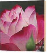White Red Rose 01 Wood Print