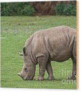 White Rhino 12 Wood Print