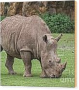 White Rhino 5 Wood Print