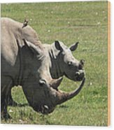 White Rhino Mother And Calf Wood Print