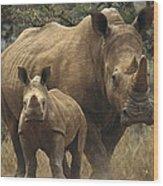 White Rhinoceros And Baby Lewa Kenya Wood Print