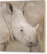 White Rhinoceros Calf Wood Print