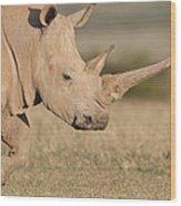 White Rhinoceros Kenya Wood Print
