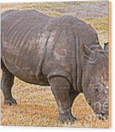 White Rhinoceros Wood Print
