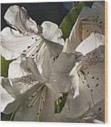 White Rhododendron B Wood Print