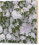 White Rhododendron Blossoms Wood Print