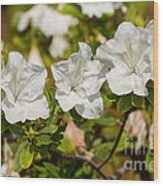 White Rhododendron Flowers In Bloom. Wood Print