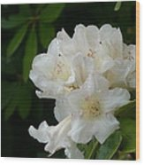 White Rhododendron With Tears Wood Print