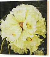 White Rhododendrons Wood Print