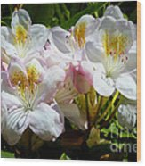 White Rhododendron In Sunlight Wood Print