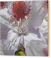 White Rhododrendon Wood Print