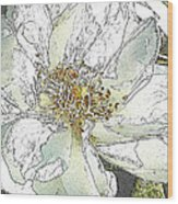 White Rose Abstract Wood Print