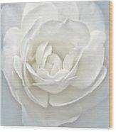 White Rose Flower Silver Blue Wood Print