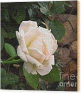 White Rose Green Oleo Wood Print