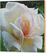 White Rose Oleo Wood Print