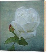 White Rose On Blue Wood Print