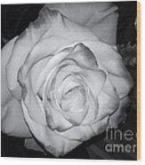 White Rose Passion Impression Wood Print