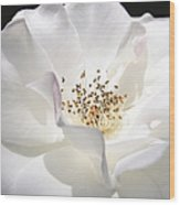 White Rose Petals Wood Print by Jennie Marie Schell