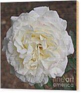 White Rose Square Wood Print