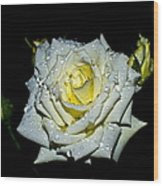 White Rose With Dew Wood Print