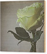 White Rose With Old Paper Texture Wood Print