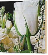 White Roses Close Up Wood Print