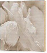 White Roses Soft Brown Wood Print