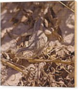 White Sands Lizard Wood Print