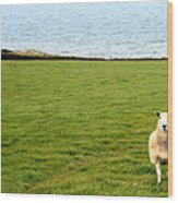 White Sheep In A Green Field By The Sea Wood Print
