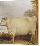 White Short-horned Cow In A Landscape Wood Print