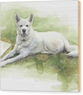 White Sled Dog Lying On Grass Watercolor Portrait Wood Print
