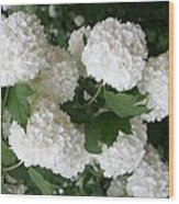 White Snowball Bush Wood Print