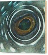 White-spotted Pufferfish Eye Wood Print