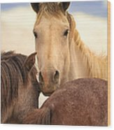 White Stallion Wild Horses On Navajo Indian Reservation  Wood Print
