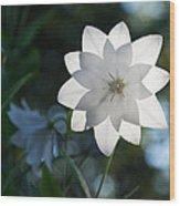 White Star Wood Print