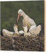 White Stork Wood Print