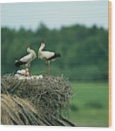 White Storks Displaying In Their Nest Wood Print