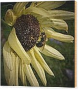 White Sunflower And Bee Wood Print